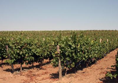 grapes (4)